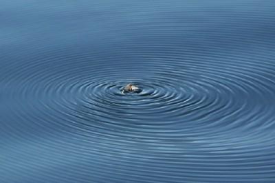 circles in lake