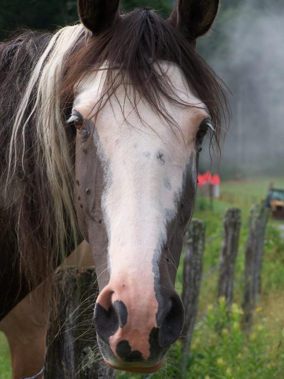 Blue Ridge Parkway Horse