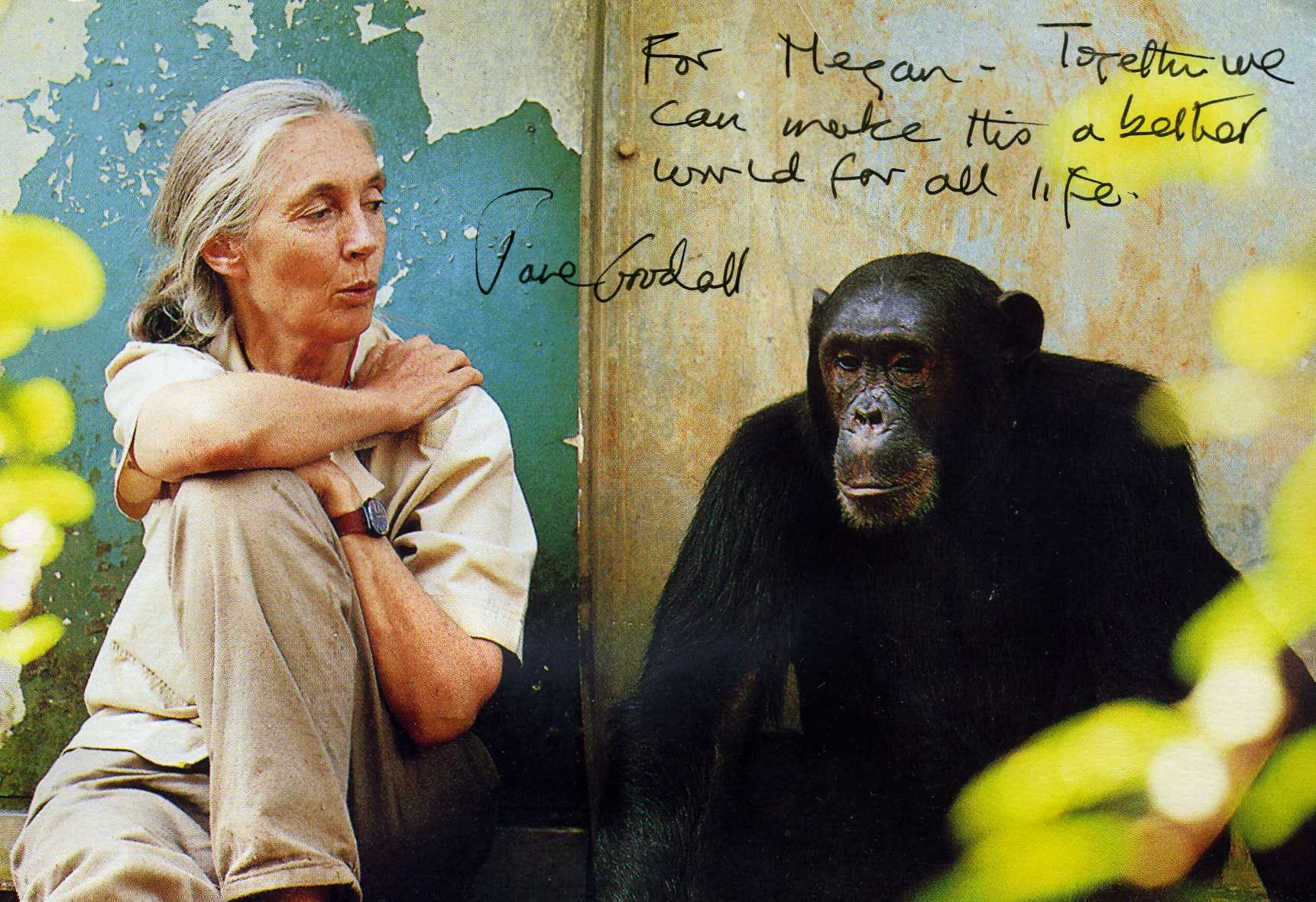 """jane goodall essay View essay - final draft 5 from basic comp 100 at rutgers  in """"in the forest of  gombe,"""" jane goodall demonstrates that it is possible to."""