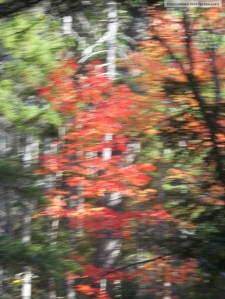 blurry trees (impressionist painting)