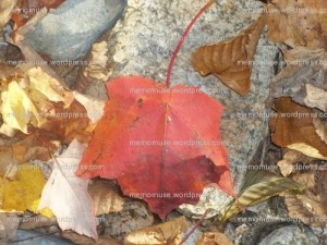 Leaf on a Rock by Megan Oteri © All Rights Reserved
