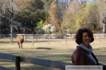 I feel beautiful around horses