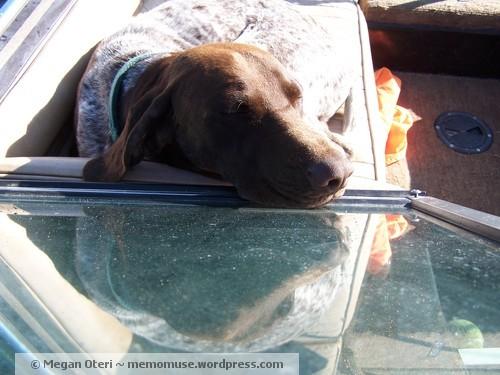 Dog in boat, resting in the sun
