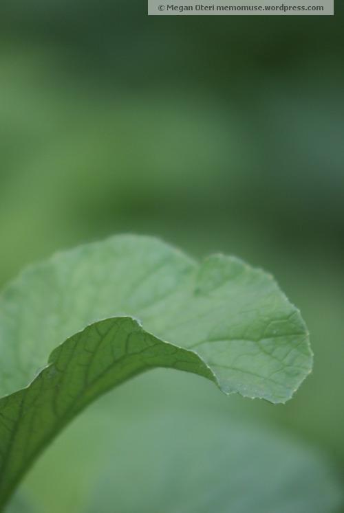 Lively Lettuce Leaf