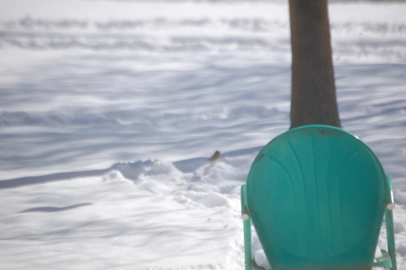 """Snow Haiku"" Bird looking for seeds Snow beauty, calm layers now Green chair aligned: tree"