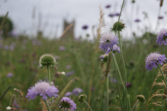 View from the bottom path of the wild flower field.