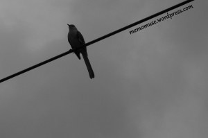 Bird on a Wire II